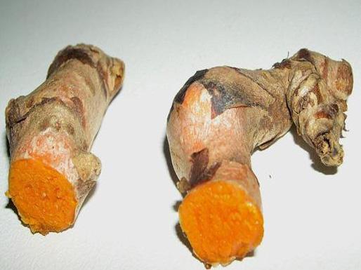 Curcuma-longa-haridra-2.jpg